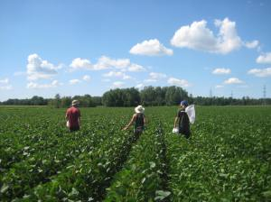 labmates doing field work in Monteregie, Qc.
