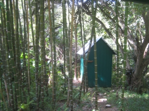composting toilet on the cacao farm (yay for P recycling!)