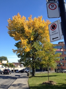 The trees are changing color as we enter fall in Montreal. A little like the academic transition time I am going through this season.....