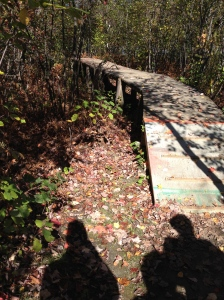 Bridge on a walk through the forest. I feel like mid-october to mid-december represent a time to bridge the end of the PhD to the beginning of the Post Doc.