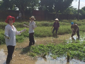 The research team doing some experiential learning by planting rice.